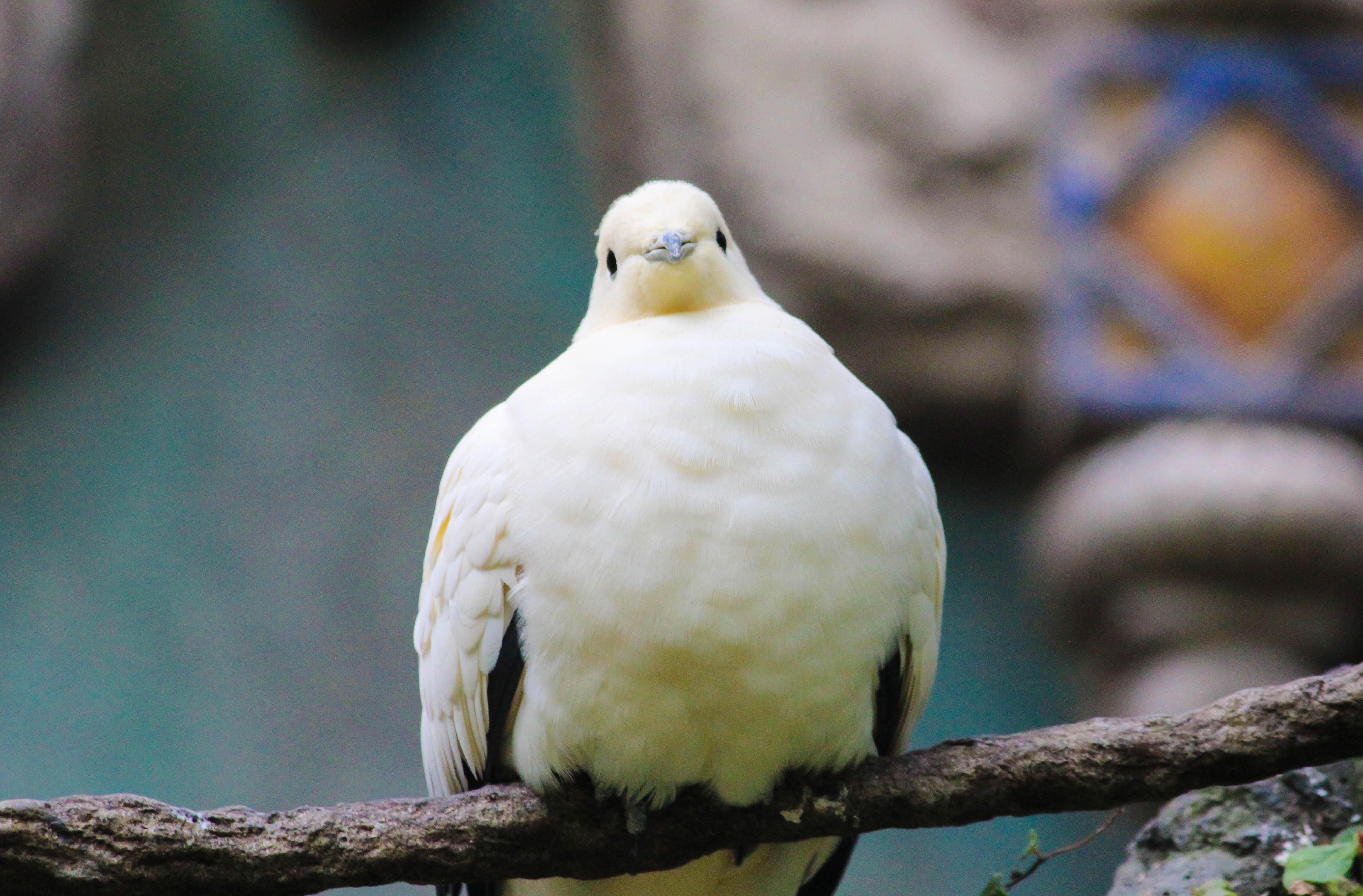 Birds of Animal Kingdom - SparklyEverAfter